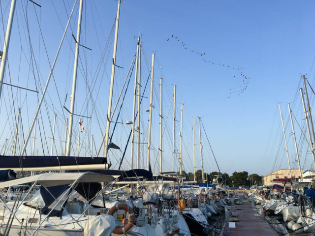 Flamingos above Marina Sant'Elmo, Cagliari.